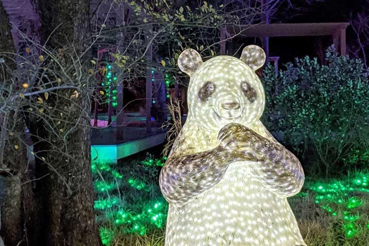 光のどうぶつえんのパンダ