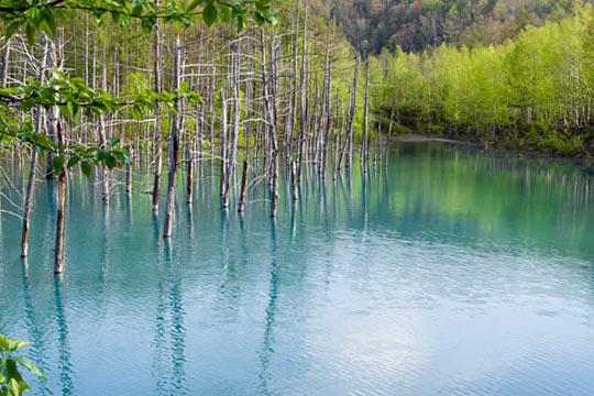 北海道 美瑛町 白金青い池 (しろがねあおいいけ)