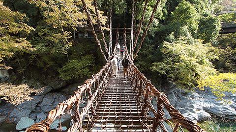 秘境の吊り橋がスリリングすぎる!?祖谷のかずら橋を渡りに行こう