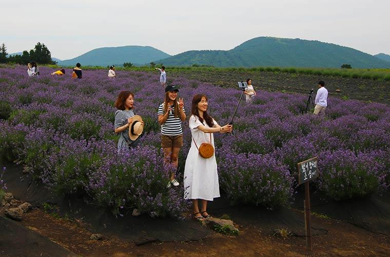 ボロムワットガーデンのラベンダー畑で記念写真を撮る観光客