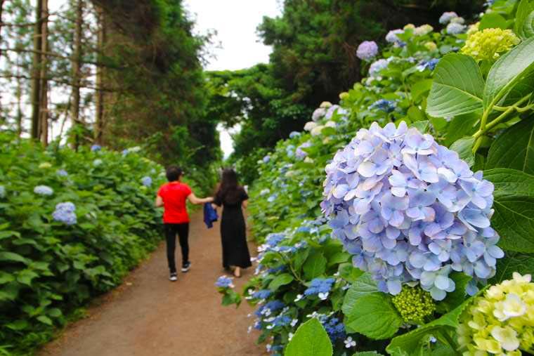 ボロムワットにある紫陽花の小道