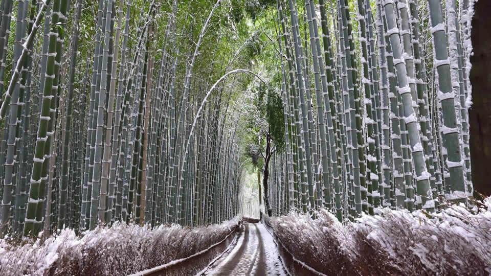 雪化粧をした京都が美しすぎる。京都冬の絶景