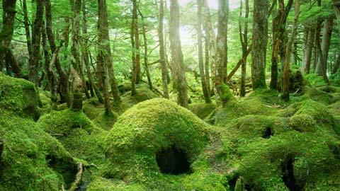 苔寺や渓流の大自然など、全国の美しい苔スポット21選