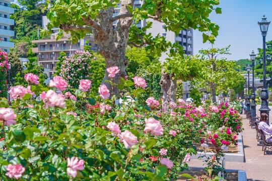 横須賀市ヴェルニー公園
