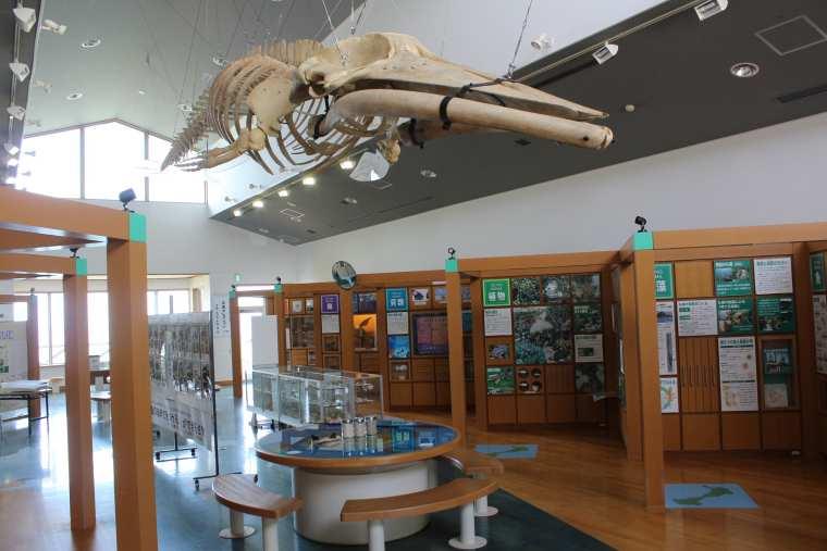 つのしま自然館内の展示