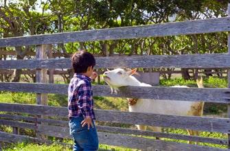 芦ケ池農業公園「サンテパルクたはら」