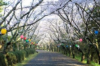 公渕森林公園(きんぶちしんりんこうえん)