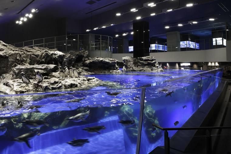 東京スカイツリー すみだ水族館