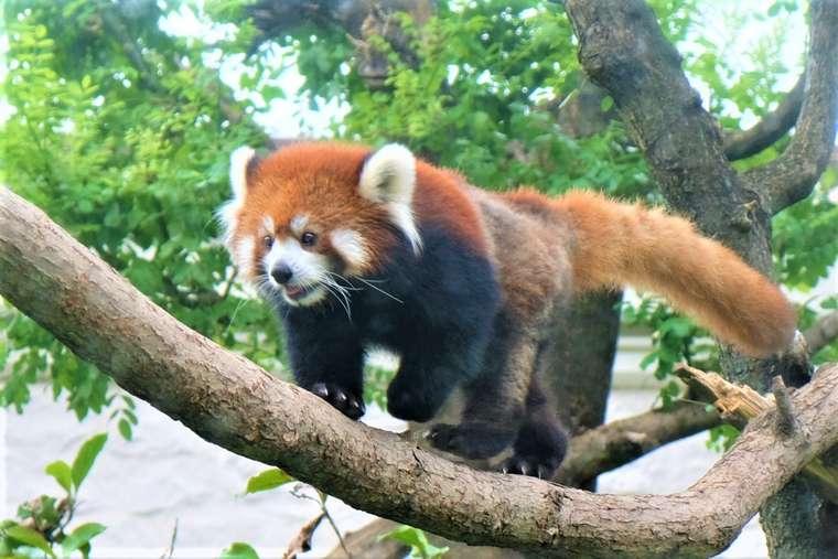 大阪 天王寺動物園