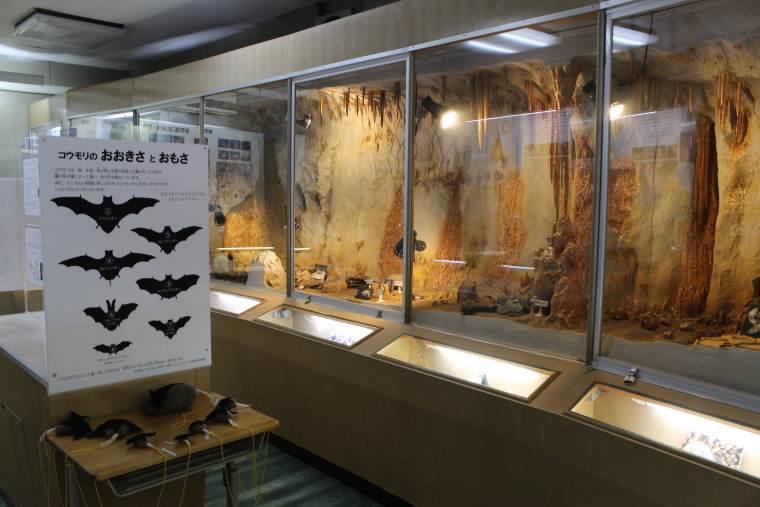 秋吉台科学博物館の展示