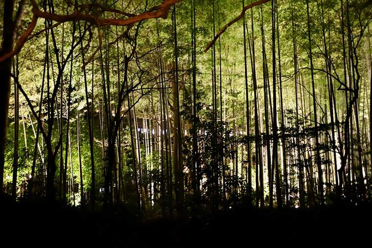 新井旅館 竹林のライトアップ