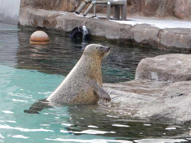 北海道 旭山動物園 「あざらし館」