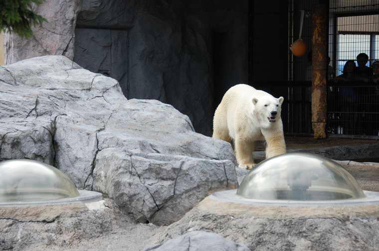 北海道 旭山動物園 ほっきょくぐま館 シールズアイ