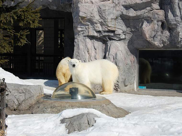 北海道 旭山動物園 ほっきょくぐま館