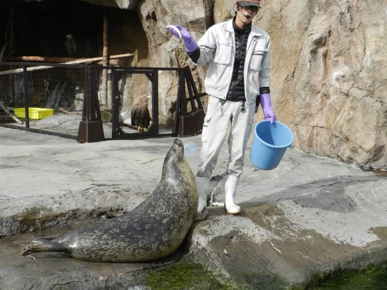 北海道 旭山動物園 あざらしのもぐもぐタイム