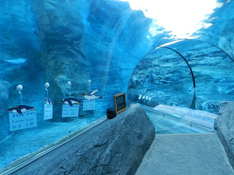 北海道 旭山動物園 行動展示 ペンギン「360度の水中トンネル」