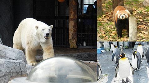旭山動物園を攻略!効率よく回るおすすめ見学ルート