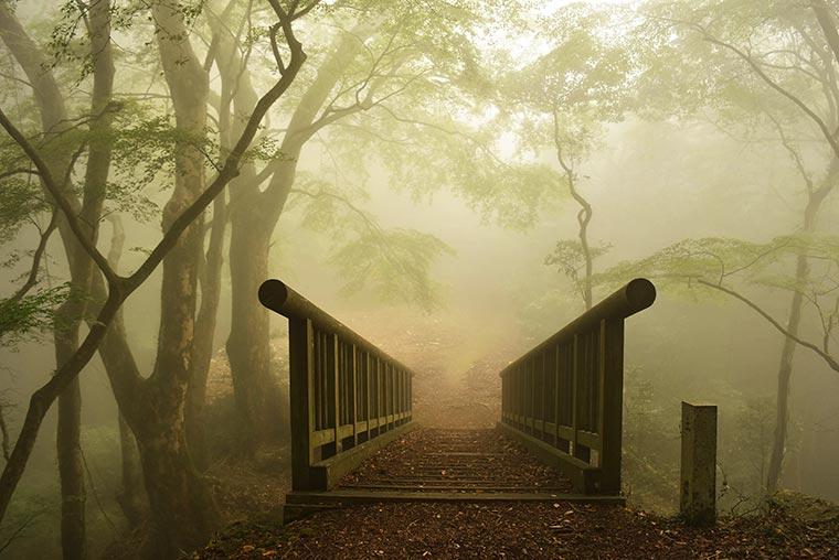 霧に包まれた大松山