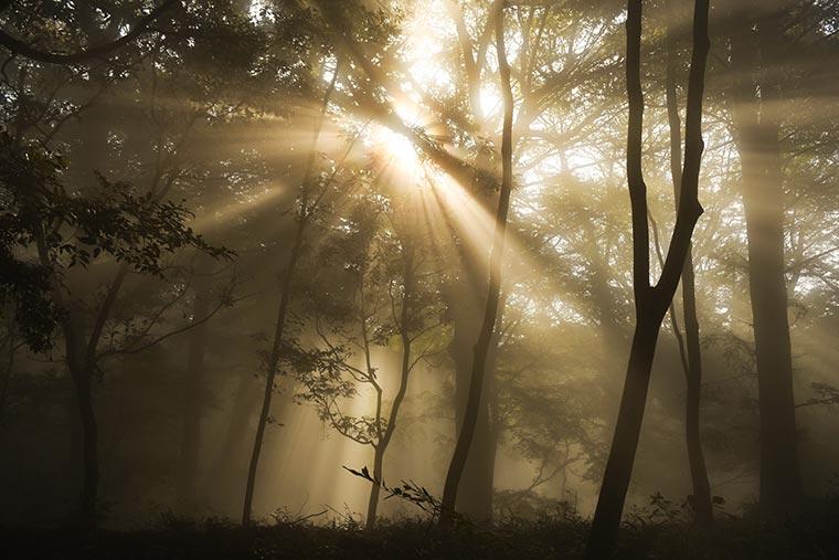 雲海の中でまるで光のカーテンのよう