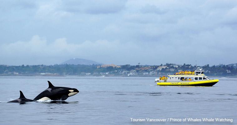 Whale watching / ホエール ウォッチング