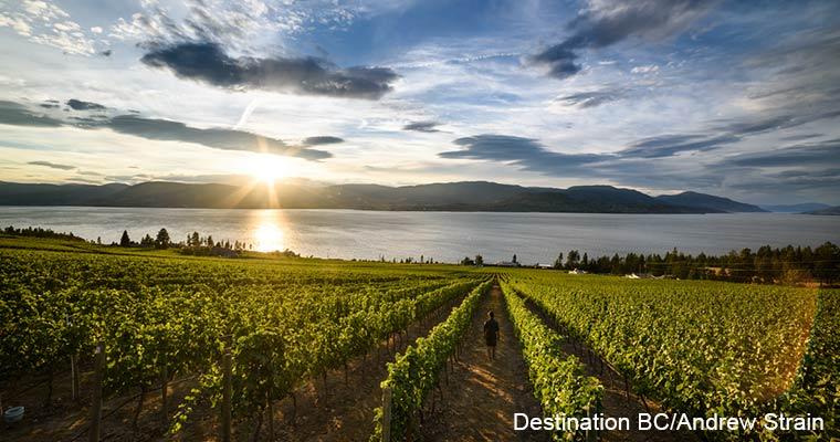 Okanagan winery / オカナガンワイナリー(ワイン)