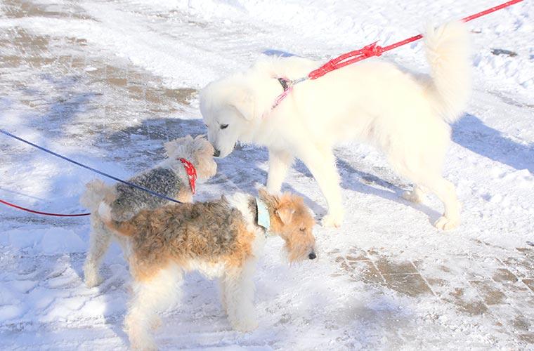 散歩の途中では、他のワンちゃんと出会うことも