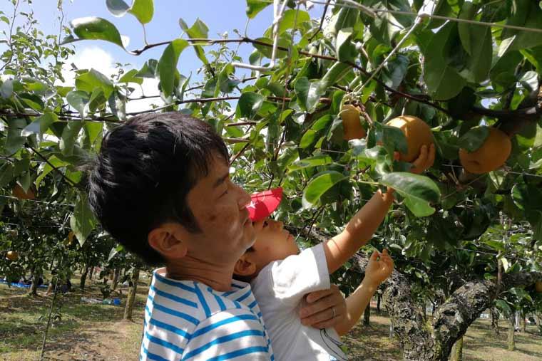 親子で梨狩り