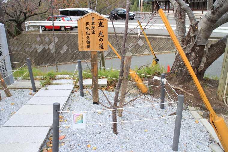 撮影記念植樹
