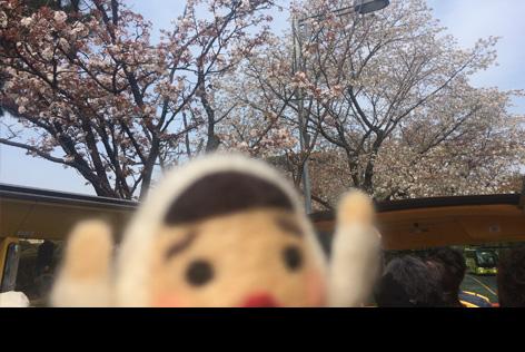 オーソラ桜