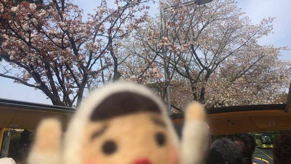 はとバスで東京お花見バスツアー行ってみた~オーソラミオ編~