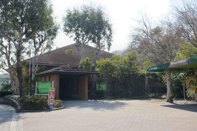 名古屋 東山動植物園 コアラ舎