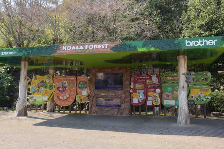 名古屋 東山動植物園 KOARA FOREST コアラの森