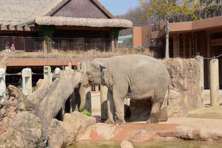 名古屋 東山動植物園 ゾウ