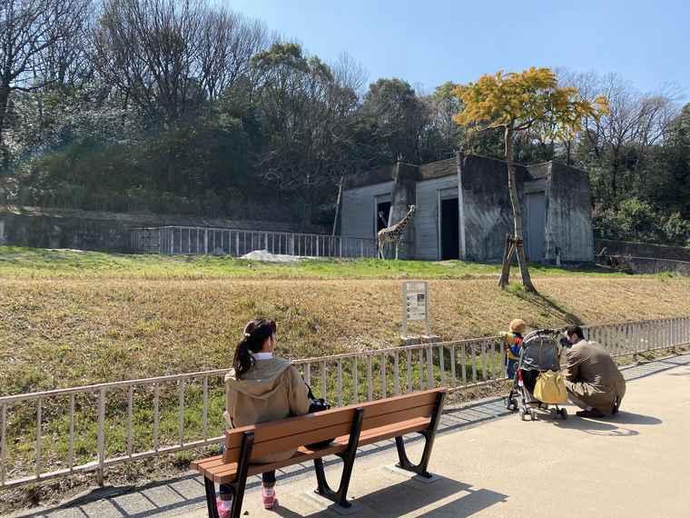 名古屋 東山動植物園 キリン舎