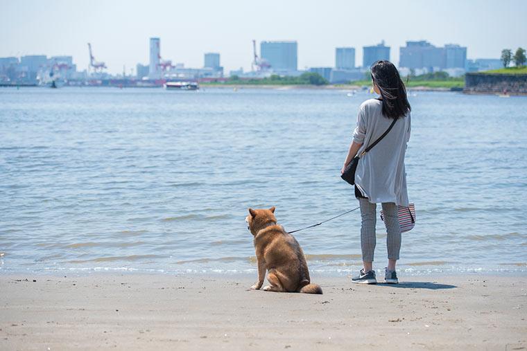 海沿いのお散歩コース「お台場海浜公園」