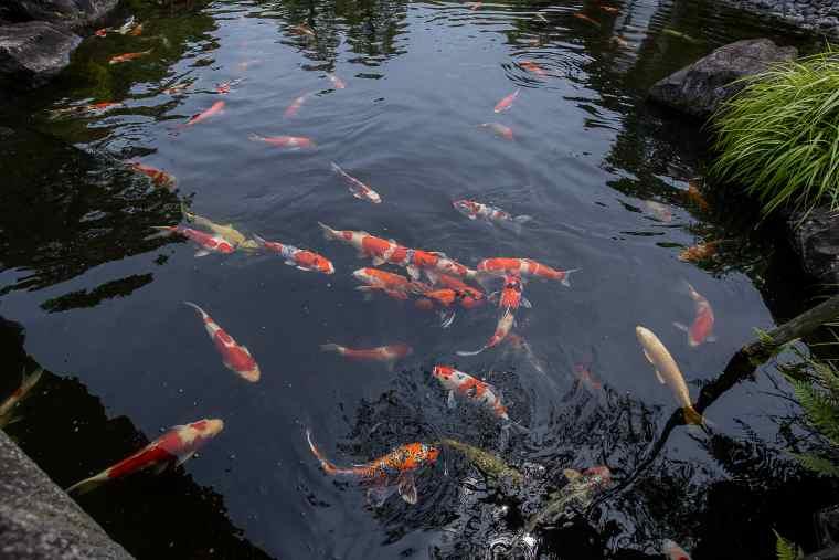 好古園の池