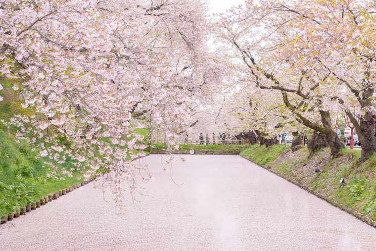 弘前公園 花筏 さくらまつり