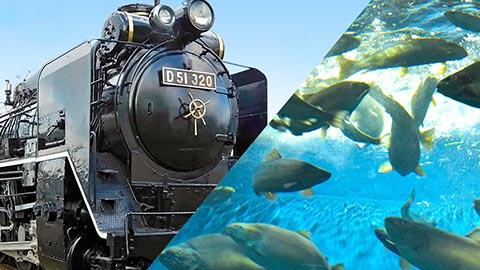 SLに水族館も!新千歳から30分圏内の北海道おすすめ道の駅
