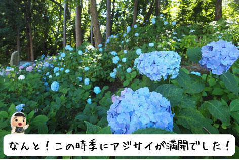 円山公園内