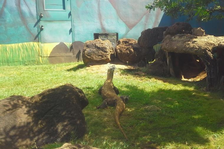 ホノルル動物園のコモドドラゴン