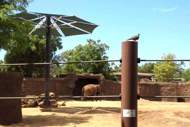 ホノルル動物園のアジアゾウのエリア