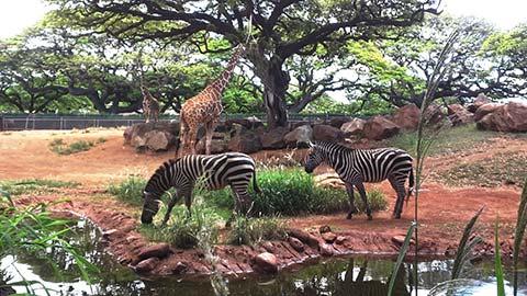 子どもが喜ぶハワイ旅!ファミリーに大人気のホノルル動物園