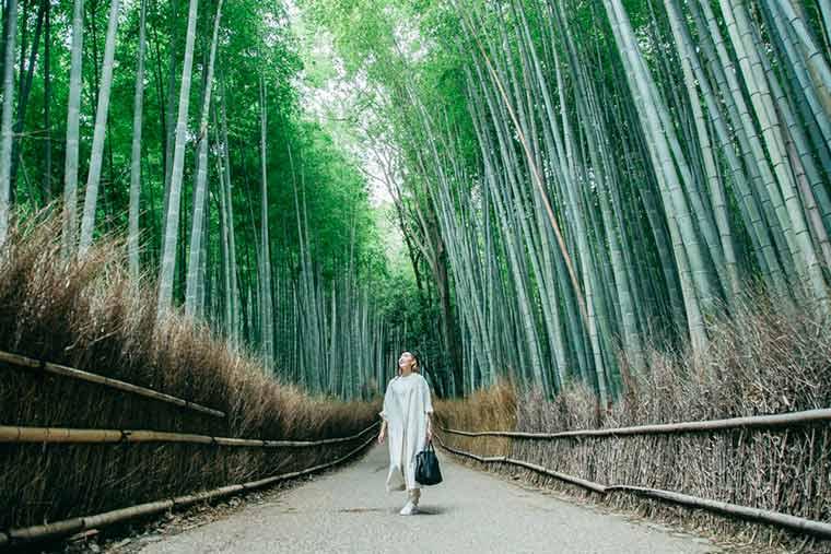 竹林の小径 早朝散歩