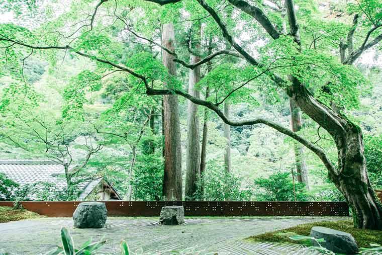 星のや京都 奥の庭