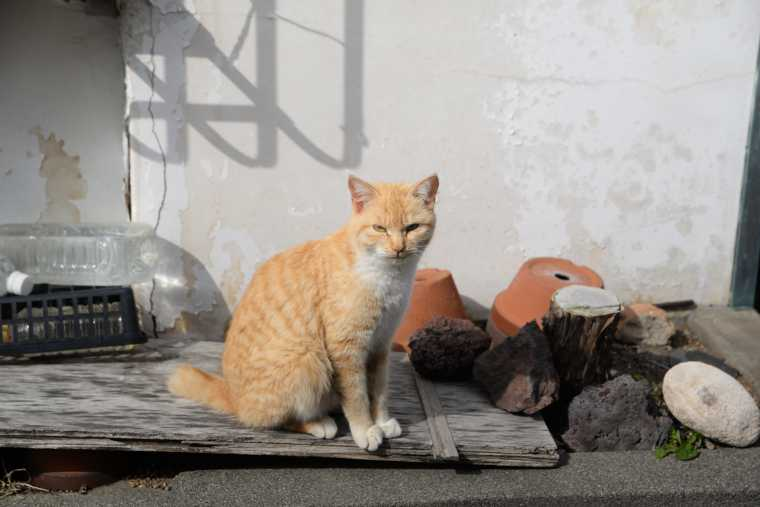 見かけた猫