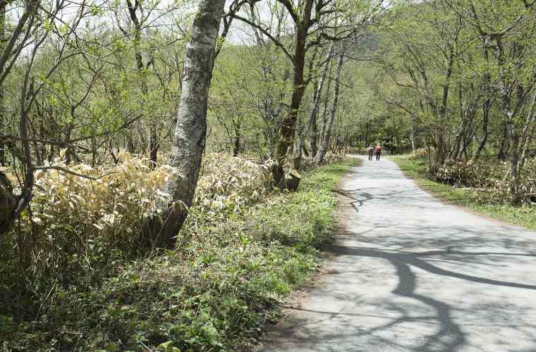 河童橋~大正池の散策ルートは定番