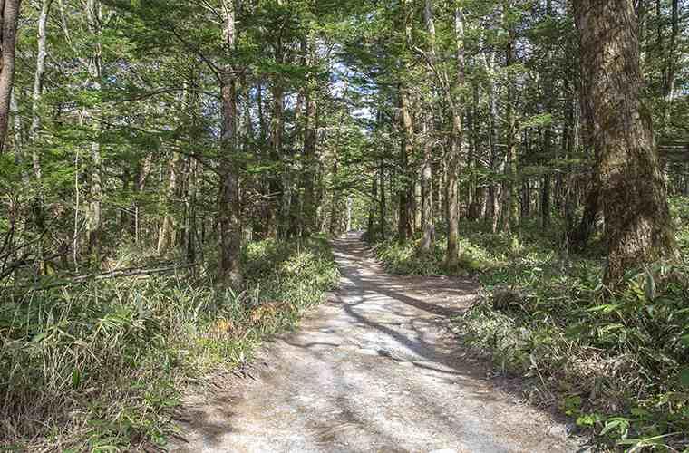 林道中心だが歩きやすい道