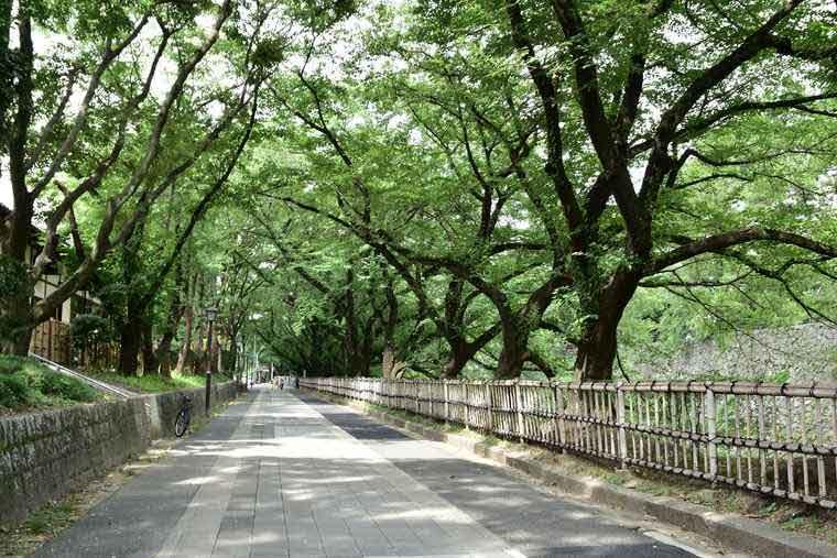 金シャチ横丁 お堀沿いの風景