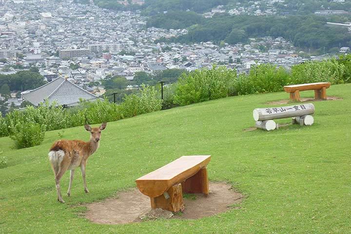奈良の街並みを見渡す若草山 写真出典/今日の奈良公園