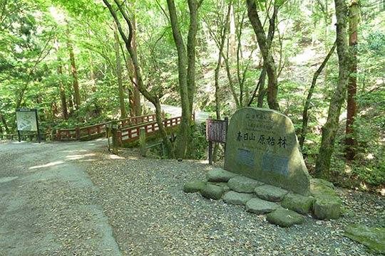 世界遺産の一部「春日山原始林」 写真出典/今日の奈良公園